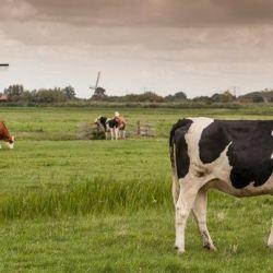 3 טיפים להצלחה מאמסטרדם היפה