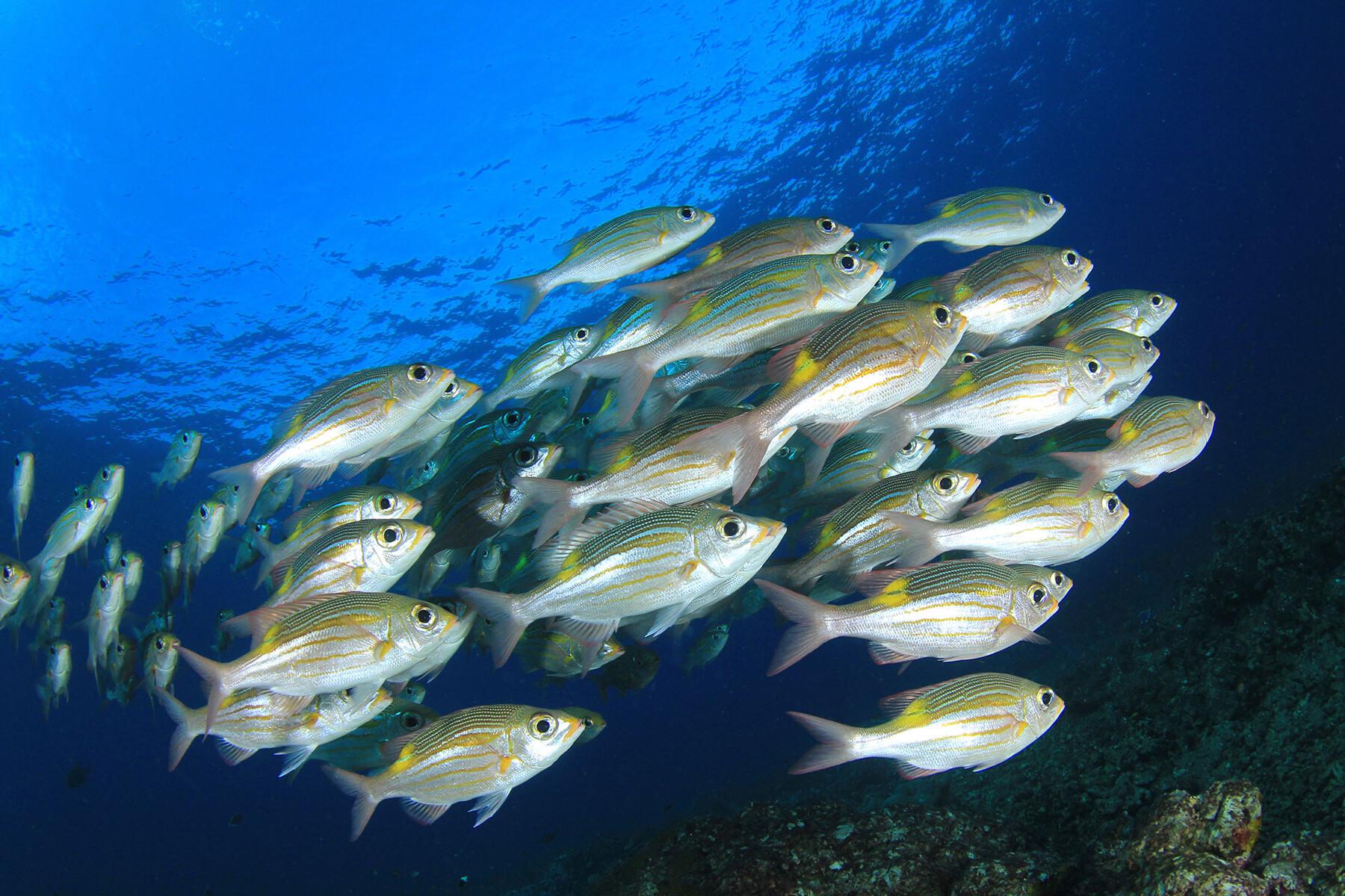 סיפורי דגים עוז קורן